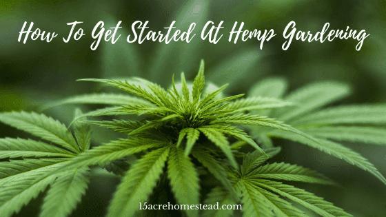 hemp gardening