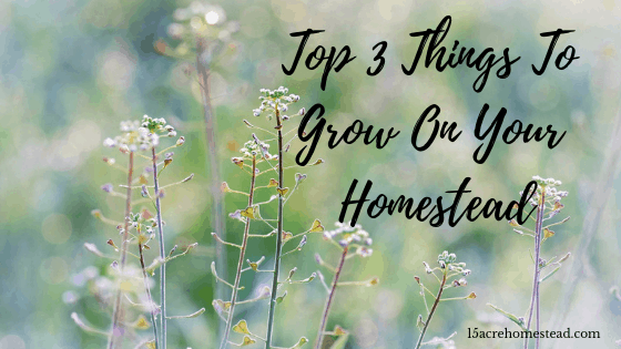 top 3 things to grow on your homestead