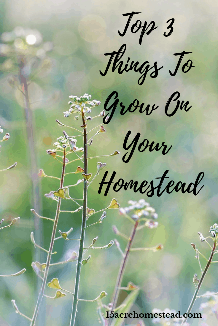 Do you know the top 3 things to grow on your homestead for not only the use but to make money from too? Take a look and find out now.