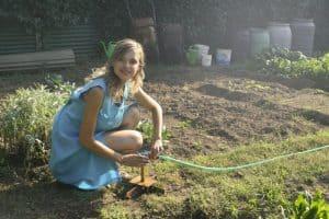 start homesteading