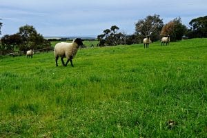 make an income from your pasture