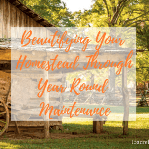Beautifying Your Homestead Through Year Round Maintenance