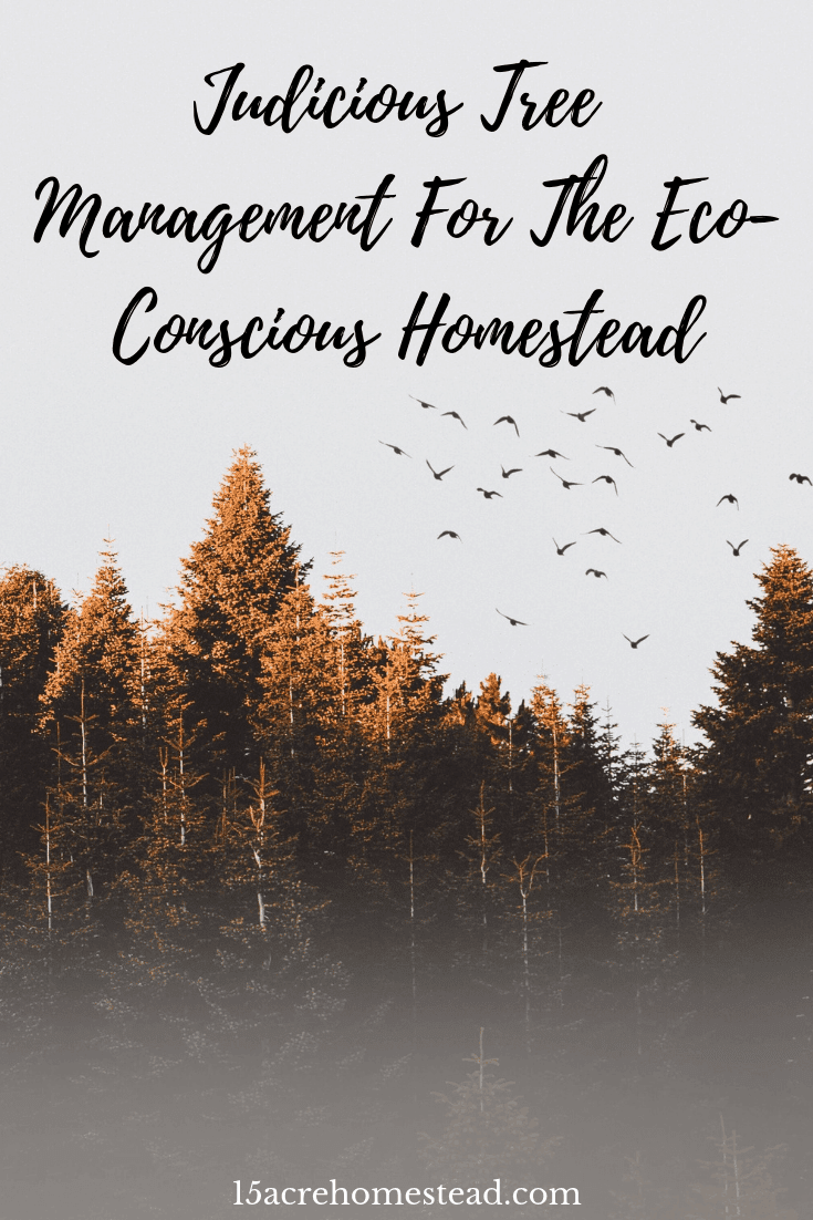 If growing trees on your homestead are important to you then knowing the proper tree management should be too. Learn more...