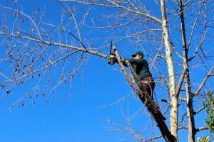 tree management