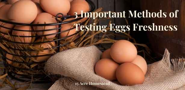 Testing eggs freshness featured image