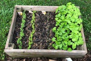 green livings: veggie garden