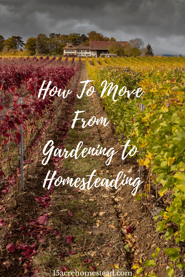 Are you ready to make the change from gardening to homesteading? This post explains what you may need to do to make the switch.
