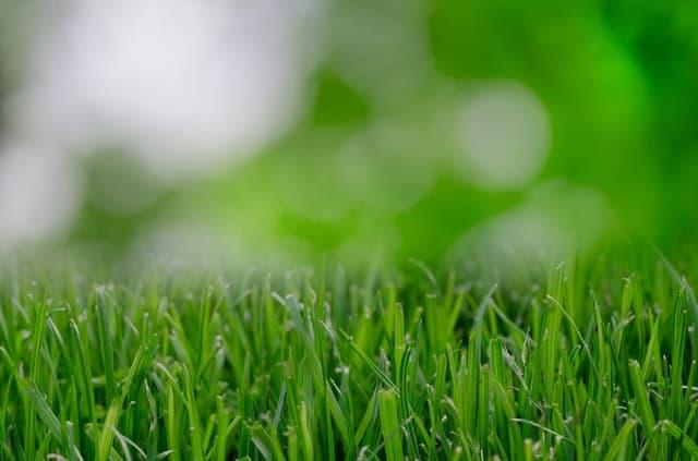 make your yard more beautiful