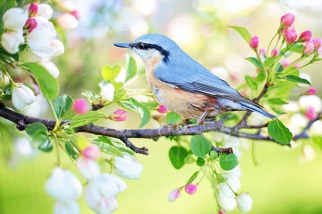 Spring bird on a branch