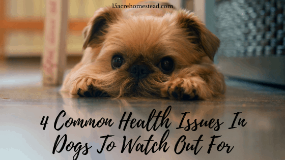 4 Common Health Issues