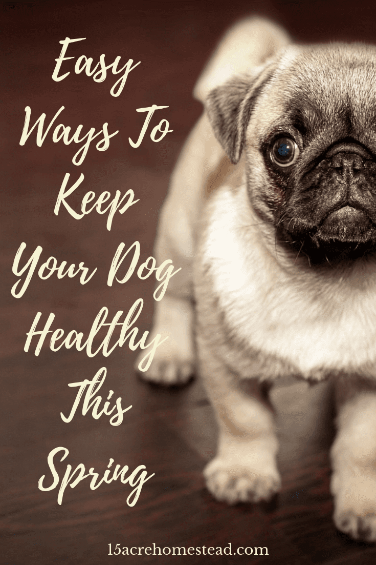 Being a responsible pet owner means keeping your dog healthy through the Spring and Summer months. These tips and suggestions should help.