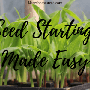 Seed Starting Made Easy: 10 Reasons and Tips