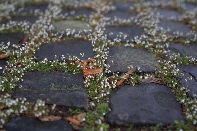 potager garden walkway