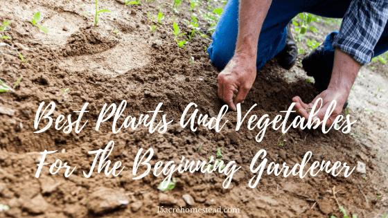beginner gardener
