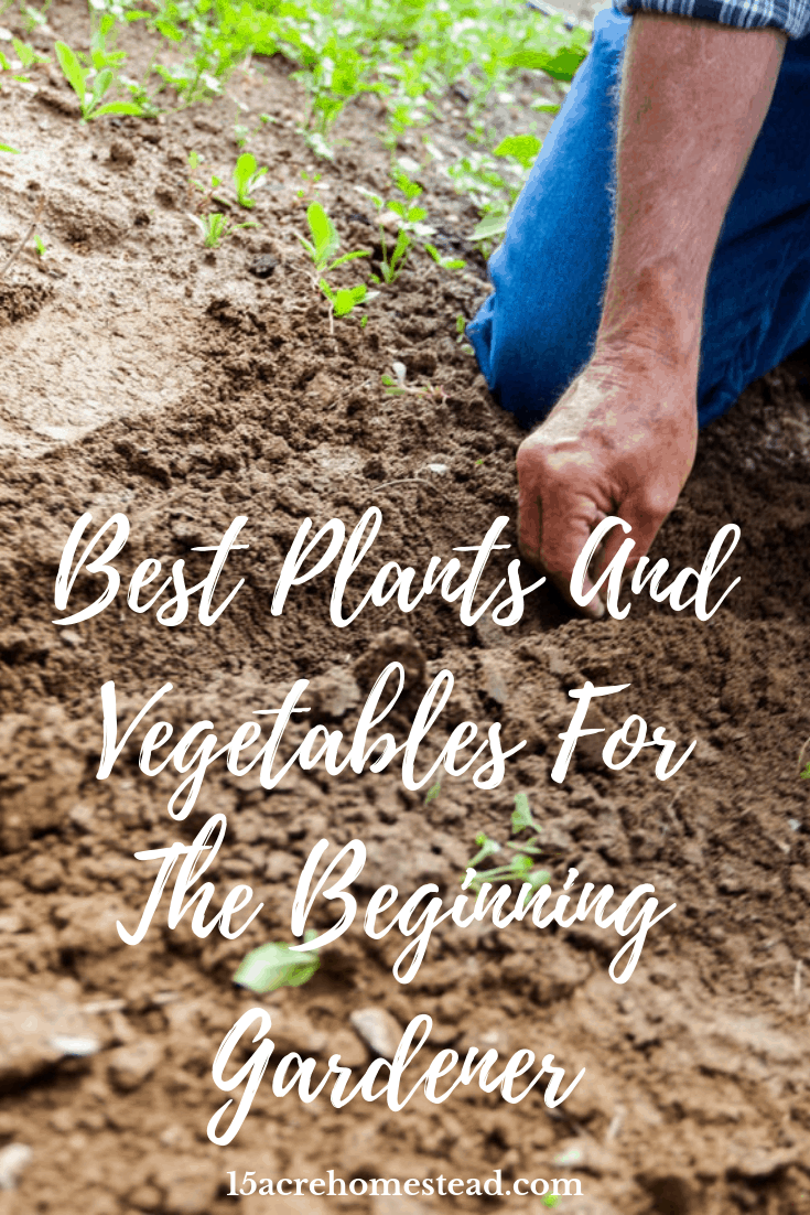 The beginner gardener has many choices when it comes to plants and vegetables for their homestead garden.