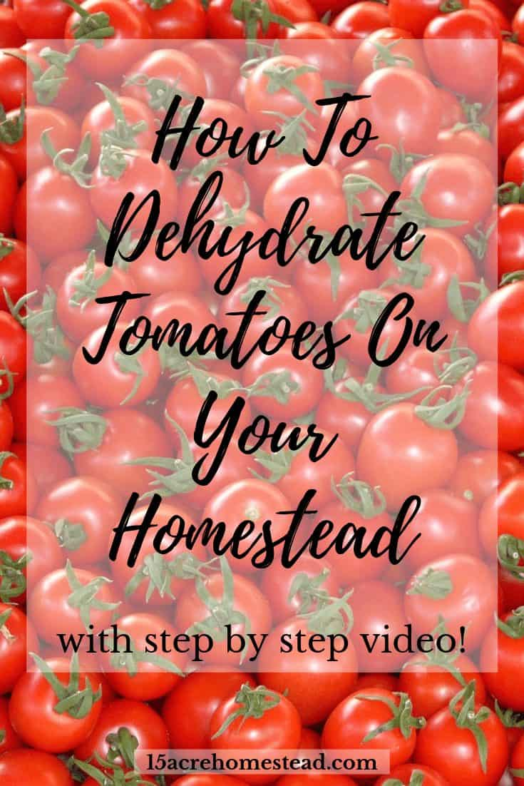 Most people love tomatoes! They are so versatile on the homestead! The problem is that most of us grow entirely too many! I needed to figure out how to preserve them other than canning and making sauce. When a friend told me I could dehydrate tomatoes, I knew I had the perfect answer.