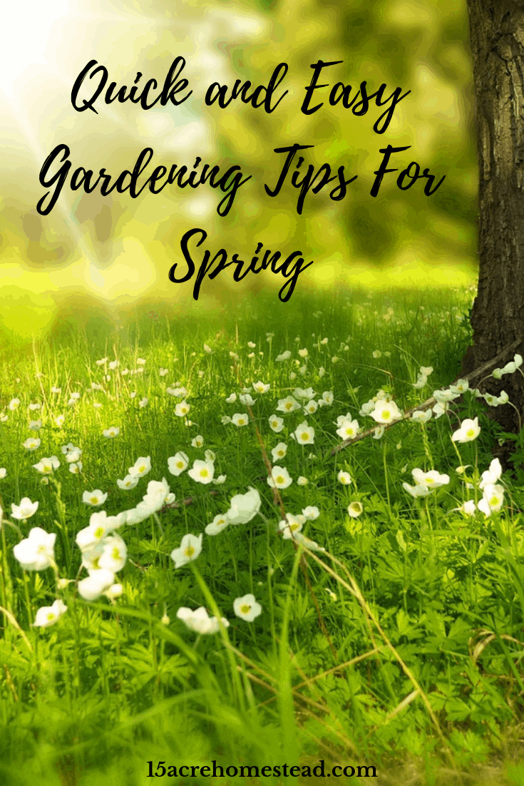 Spring is here, so use these 4 quick and easy gardening tips for your homestead in order to have a productive season!