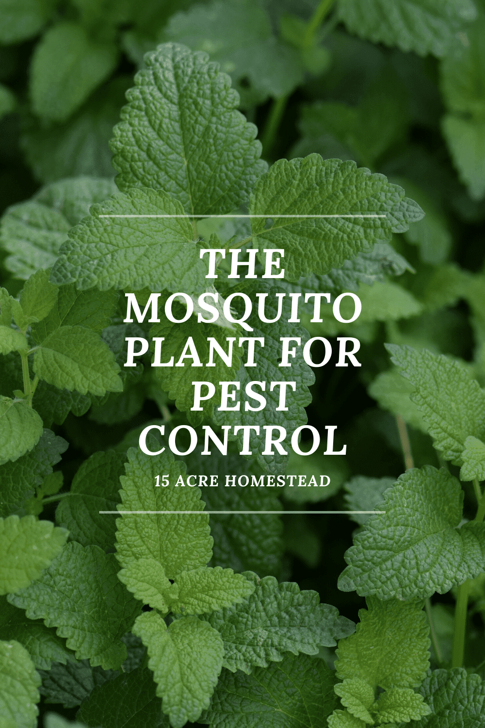 If you have a problem with mosquitoes you may want to try planting these plants in your yard and on your patio!
