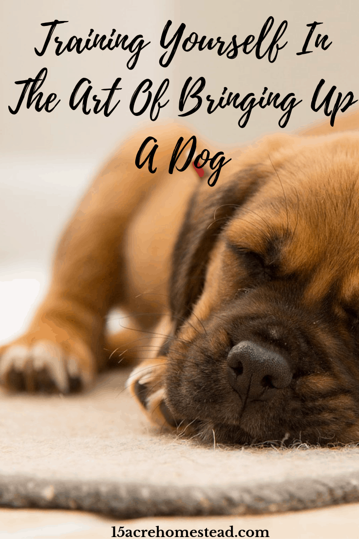 Train yourself in the art of bringing up a dog and reap the rewards of having a loyal canine friend!