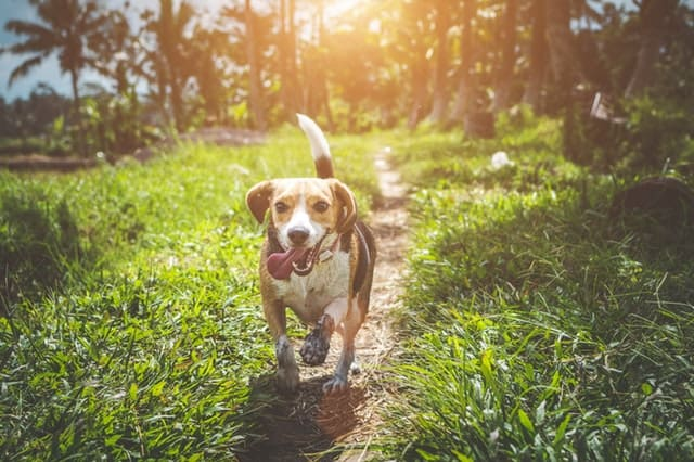 dog walking in the sunlight