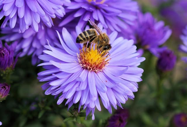 Flowers will attract wildlife to the Garden