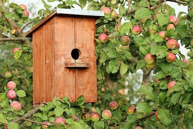 A birdhouse in the peach trees