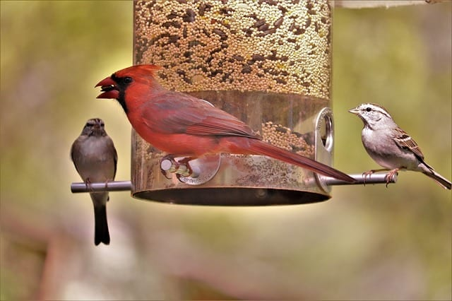 birds at a hanging feeder
