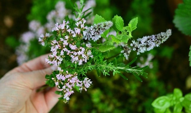 womans hand holding herbs