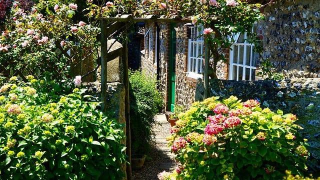 bushes and plants on garden walkway