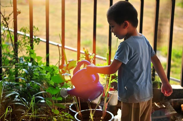Little boy watering vegetables with watering can