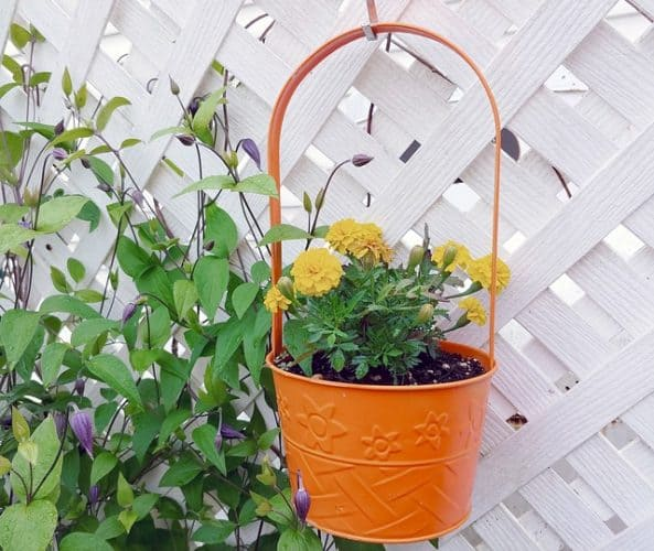 flower in a pot on a trellis