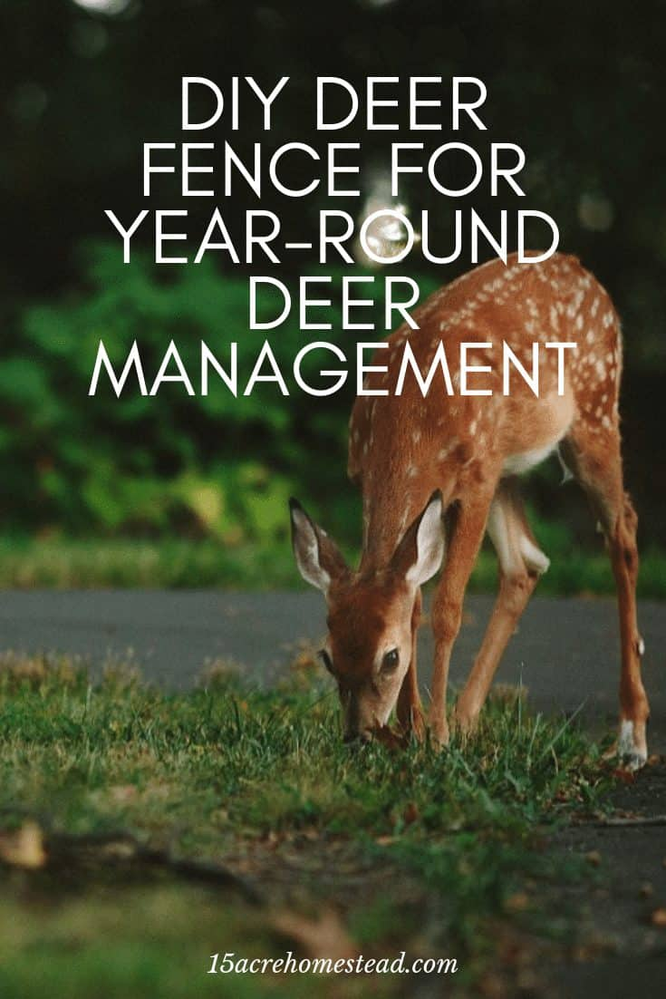 Problems with deer in the yard and garden? Try this great and affordable deer fence solution from Deerbusters. #deer #deermanagement