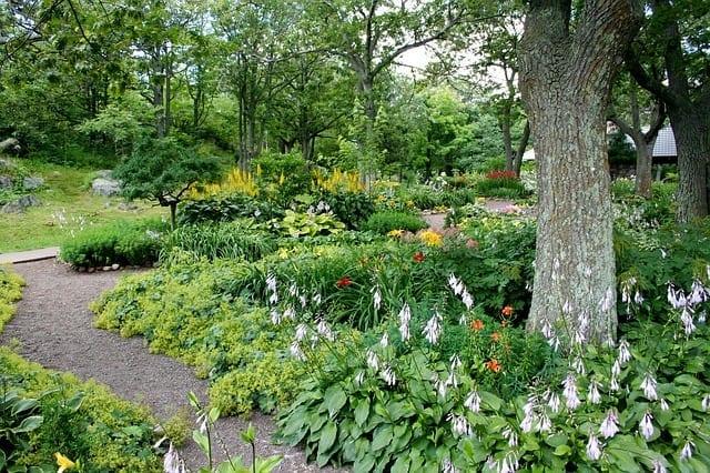 A very lush and beautiful yard.