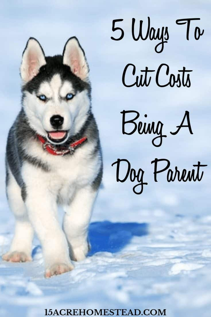Wanna cut the cost of being a dog owner? These simple tips can help you to do just that. Start spending less and enjoying your pooch even more.