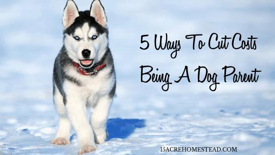 Cut Costs Being a Dog Parent