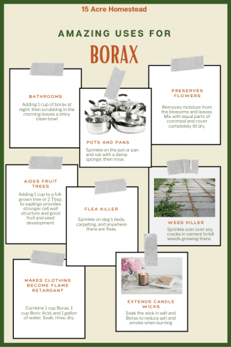 Borax is beneficial in so many ways around the homestead. Check out the many ways you can be using Borax today!
