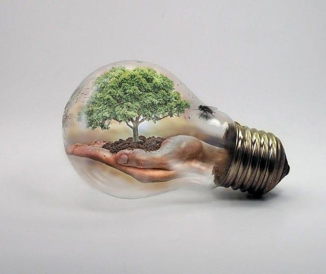 Lightbulb with green living environment inside