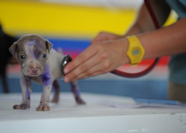 small dog at vet