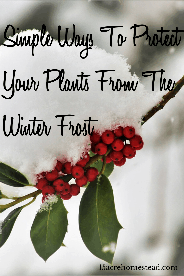 Use these quick tips to protect your plants from the winter cold and freeze.