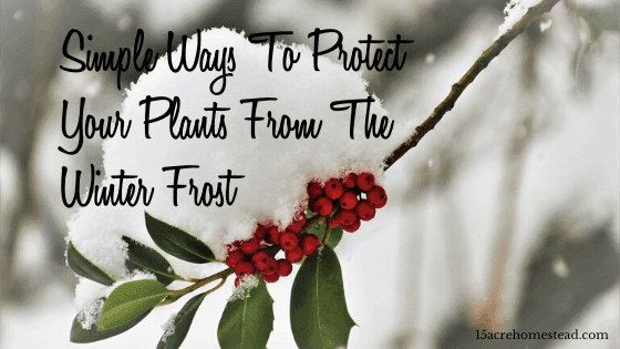 protect your plants