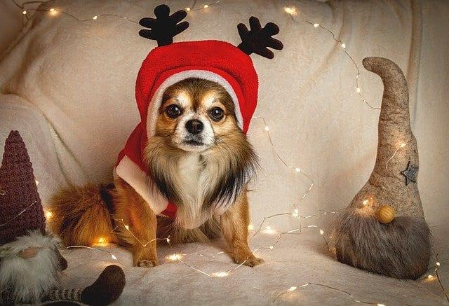 homestead animals- christmas gifts