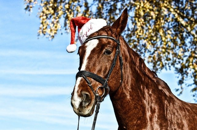 Make sure to include your horse when buying for your homestead animals.