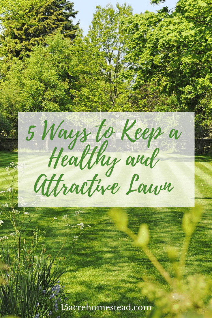 Check out these 5 tips to having an attractive and healthy lawn that you can be proud of year after year.