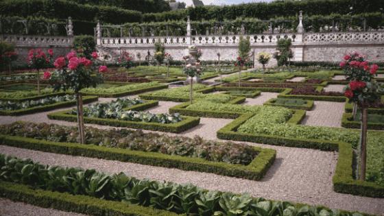 An eco-friendly garden