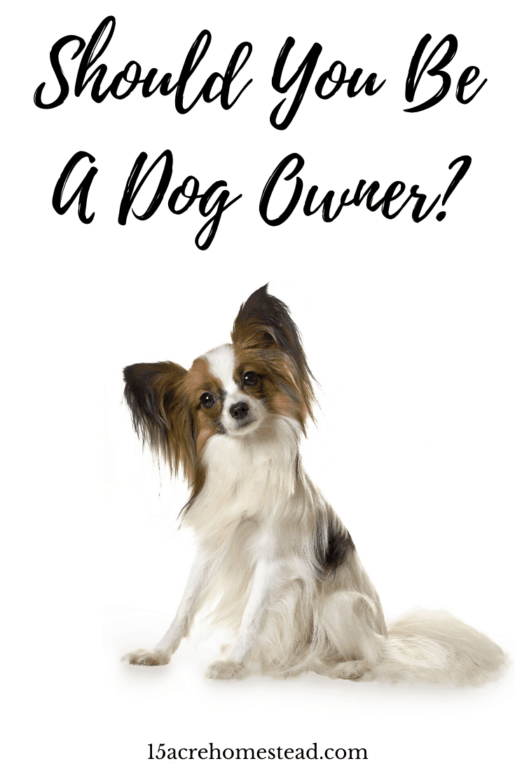 Use these simple suggestions to determine if being a dog owner is right for you and your family.
