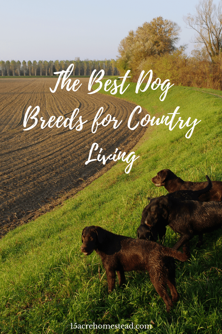 By selecting a dog that is suited to country life, you can ensure that your new dog has the fun, exciting and rewarding life it deserves.