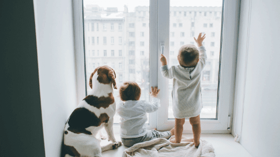 Dog sitting with the children at a window