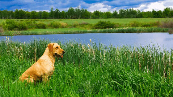Dog in the country