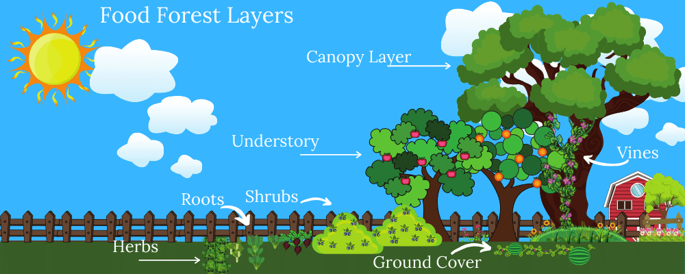 Food Forest Layers Infographic