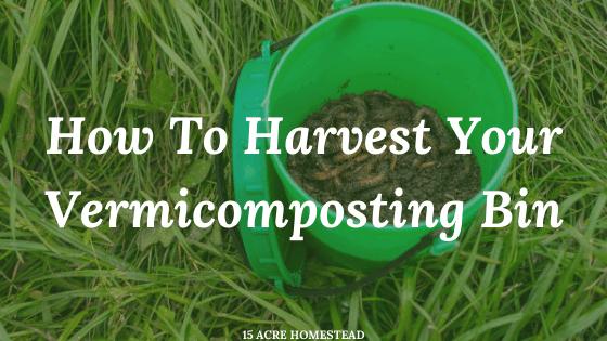 harvest your vermicomposting bin